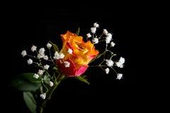 Botão de Rosa e de Gypsophila Imagem de Stock