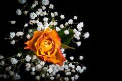 Botão de Rosa e de Gypsophila Imagens de Stock Royalty Free