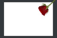 Botão de Rosa no papel imagem de stock