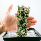 Botão do cannabis foto de stock royalty free