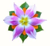Botão do Tulip Imagem de Stock Royalty Free