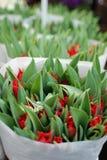 Botão do Tulip Imagens de Stock