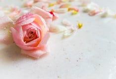 Botão e pétalas cor-de-rosa cor-de-rosa bonitos com gotas de orvalho no mármore Cartão perfeito do fundo para o aniversário, o di foto de stock royalty free