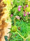 Botão verde do sem-fim e de flor Fotos de Stock Royalty Free