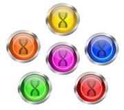 Botón del icono de la DNA Imagen de archivo libre de regalías