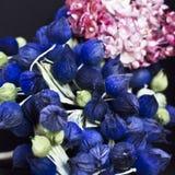 Botões azuis e lilás cor-de-rosa em um fundo preto Fluxo artificial imagem de stock royalty free