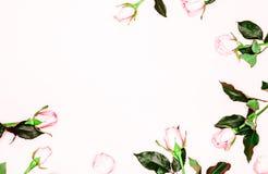 Botões cor-de-rosa das rosas no fundo branco Configuração lisa, vista superior Fundo do `s do Valentim imagens de stock