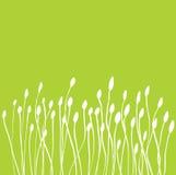 Botões da grama verde Imagens de Stock