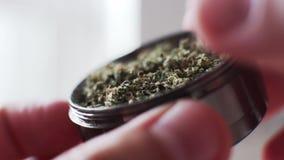 Botões da marijuana do moedor no macro super Cultura dos botões médicos de fumo do cannabis vídeos de arquivo