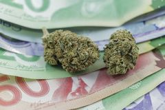 Botões da marijuana no dinheiro canadense imagem de stock