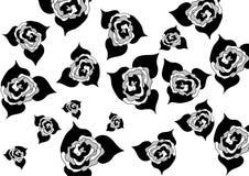 Botões das rosas do tamanho diferente em um fundo branco Imagem de Stock Royalty Free