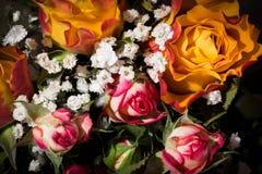 Botões das rosas e do Gypsophila Foto de Stock