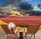 Botões de ouro de florescência da mola Fotos de Stock Royalty Free