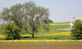 Botões de ouro e colheitas plantadas Imagem de Stock