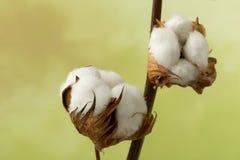 Botões do algodão Imagens de Stock