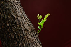 Botões na árvore Foto de Stock Royalty Free