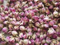 Botões secos de flores cor-de-rosa do chá Fotografia de Stock