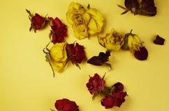 botões secos e pétalas cor-de-rosa Fotos de Stock Royalty Free