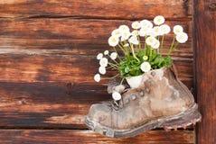 Bota de cuero vieja con la flor dentro en una pared de madera Foto de archivo libre de regalías