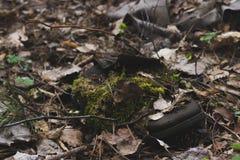 Bota del bosque de Mossing Fotografía de archivo libre de regalías
