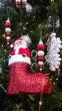 Bota Papá Noel en el árbol de pino Fotografía de archivo libre de regalías