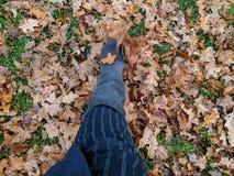 Bota que retrocede as folhas de outono fotos de stock royalty free