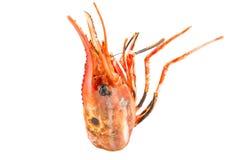 Botan Head Shrimp. Isolated on white background Royalty Free Stock Image