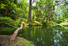 Botanic Garden. Famous botanic garden on Sao Miguel on Azores Royalty Free Stock Images