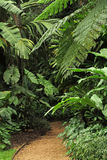 Botanic Garden. The Flecker Botanic Gardens, Cairns, Queensland, Australia Royalty Free Stock Photo