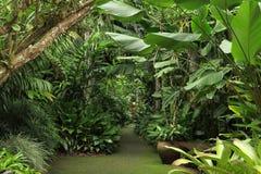 Botanic Garden. The Flecker Botanic Gardens, Cairns, Queensland, Australia Stock Photo