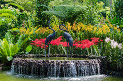 Botanic garden with beautiful flower decoration royalty free stock photo