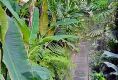 Botanic garden. With beautiful plants stock photography