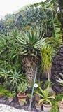 Botanic garden from Catania small plants area Royalty Free Stock Photos