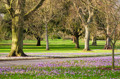 Botanic garden with flowers Stock Images