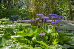 Botanic garden Padova / ITALY - June 16, 2018: Amazing tropical greenery trees, shrubs and plants with green leaves indoors royalty free stock photos