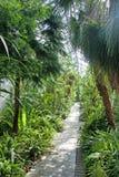 Botanic garden - palm conservatory Stock Photos