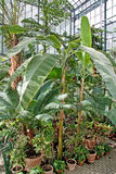 Botanic garden - palm conservatory Stock Photography