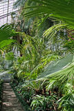 Botanic garden - palm conservatory Stock Photo
