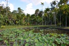 Botanic Garden. Of Pamplemousses, Mauritius Royalty Free Stock Photography