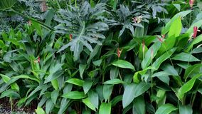 Botanic garden in Singapore stock video