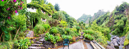 Botanic garden. Tropical botanic garden against mountains, Portugal, Madeira stock images