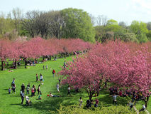 Botanic gardens in Brooklyn Stock Photography