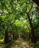 Botanic Gardens. Pathway lined with beautifully green trees in summer Royalty Free Stock Images