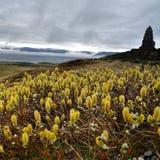 Botanic of Iceland Stock Photography