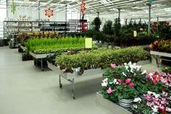 Botanic shop Royalty Free Stock Photos