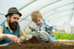 Botanic worker. botanic worker child with father in greenhouse. farm worker in botanic garden. botanic worker in. Greenhouse farm. passionated about their job Royalty Free Stock Photos