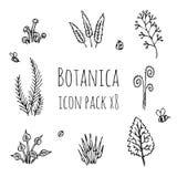Botanica - стилизованные 8 заводов, грибы и насекомые monochrome черного значка деталей установленных состоя из иллюстрация вектора
