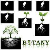 Botanica illustrazione vettoriale
