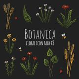 Botanica floral dark - stylized nine items colored icon set consisting of plants, flowers and insects royalty free illustration