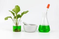 Botanica organica naturale di erbe Fotografia Stock Libera da Diritti
